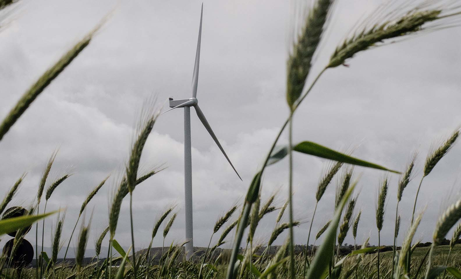 View on a wind turbine in a field