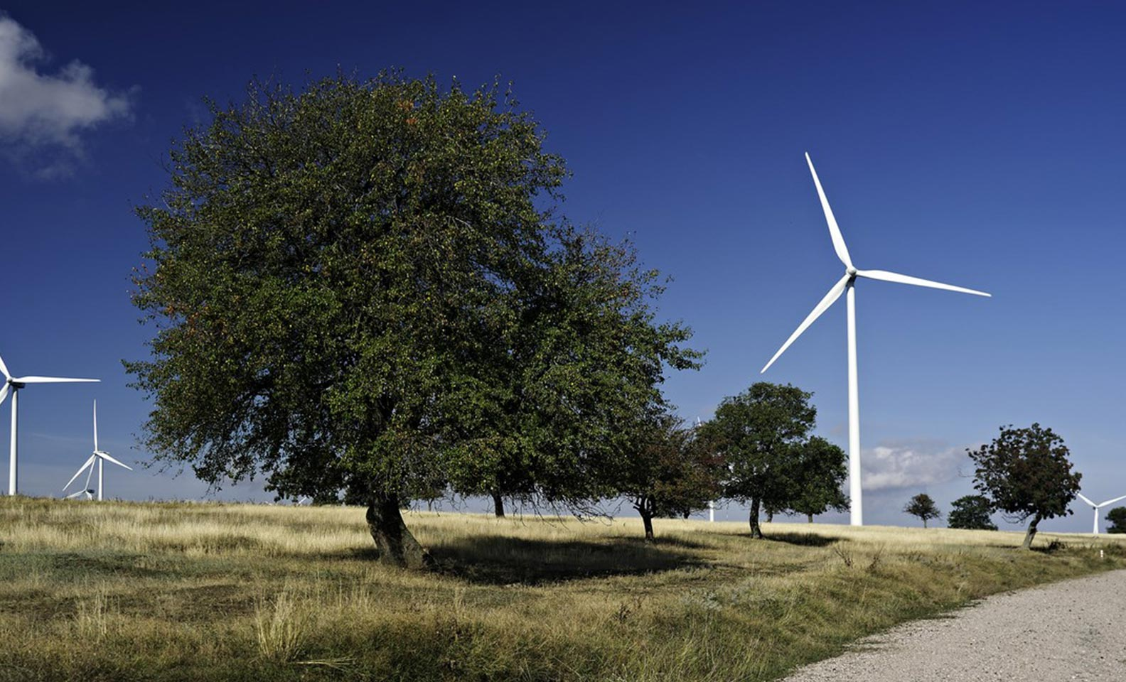Landscape with wind turbines and trees